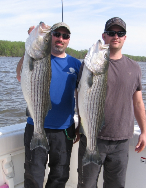 Two nice Hudson River stripers.