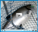 Lake Ontario and Hudson River fishing videos