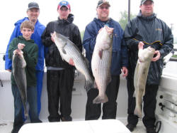 Four Nice Stripers