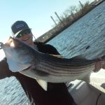 Hudson River striper fishing charters pics 29