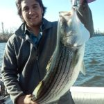 Hudson River striper fishing charters pics 28