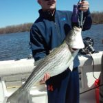 Hudson River striper fishing charters pics 27