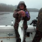Hudson River striper fishing charters pics 23