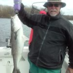 Hudson River striper fishing charters pics 13