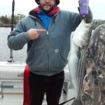 Hudson River striper fishing charters pics 11