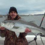 Hudson River striper fishing charters pics 30