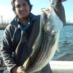 Hudson River striper fishing charters pics 28
