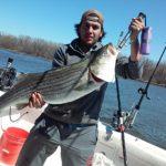 Hudson River striper fishing charters pics 26