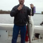 Hudson River striper fishing charters pics 15