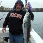 Hudson River striper fishing charters pics 12