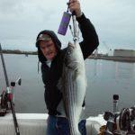 Hudson River striper fishing charters pics 3