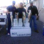 four keeper Hudson River striper bass