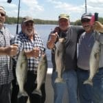 four man limit of stripers